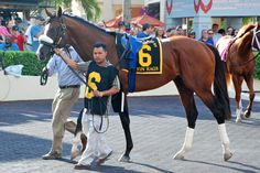 Union Rags at the 2012 Florida Derby  ©Catie Staszak, favorite to win the Kentucky Derby. What a beauty.