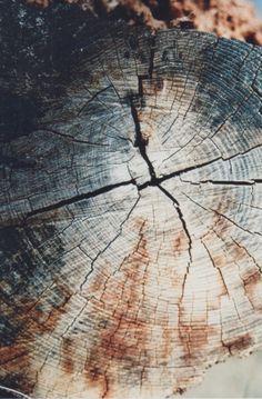 tree stump + wood grain