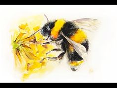 Watercolor Flowers and a Butterfly Painting Demonstration Bee Painting, Butterfly Painting, Butterfly Watercolor, Watercolor Animals, Lemon Watercolor, Arches Watercolor Paper, Watercolor Paintings, Bee Sketch, Bee Drawing