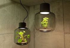 Greenery in a windowless space is not a problem anymore with the Mygdal Plant Light which has a self-sustaining ecosystem that a plant can grow in it undisturbed.