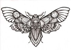 simple skull moth tattoo - Google-haku