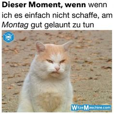 Dieser Moment, wenn ich es nicht schaffe, am Montag gut gelaunt zu tun - Angry Cat