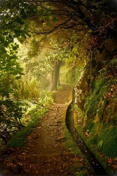 The lonely path in the green forest.