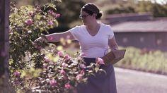 Vad passar bättre på Rosendals Trädgård än en sockerkaka med rosenblad? Följ skapandet från blad till kaka i det fina lilla…