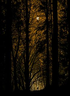 The forbidden forest...