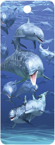 3D Dolphins #16276