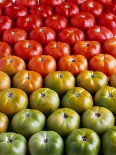 I love planting a good tomatoe Garden-10 Simple Tips For Growing Tomatoes