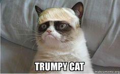 trumpy-cat.jpg More