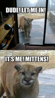 Lol - I think he ate mittens!