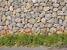 Mauer-Blümchen