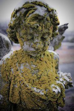 lichen weathered angel