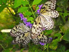 Butterflies by Rachel Haas, via 500px