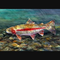 RAINBOW TROUT Watercolor Print by Dean Crouser by DeanCrouserArt