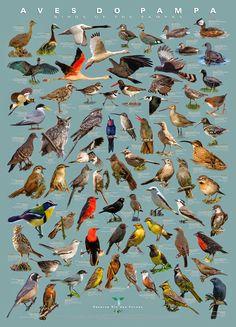 Guia: as aves do Pampa, by Renato Rizzaro and Gabriela Giovanka.
