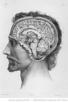 The Number One Human Anatomy and Physiology Course Learn About The Human Body With Illustrations and Pictures - Human Anatomy Head Anatomy, Human Anatomy Art, Brain Anatomy, Human Anatomy And Physiology, Body Anatomy, Anatomy Drawing, Medical Anatomy, Illustrations Médicales, Medical Illustrations