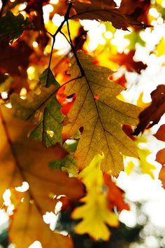 Autumn Leaf 2 by Pank Seelen, via Flickr