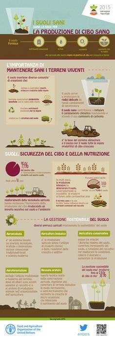 FAO-Infographic-IYS2015-fs2-ita