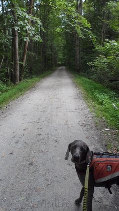 """The topic we're asked about most frequently (aside from """"why in the world would you hike for that long?"""") is hiking with a dog. It fascinates people and they are always curious how our dog, Rooney, handles living in the woods. So we thought we'd take a minute to sum up what we've learned and ..."""
