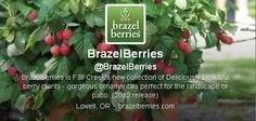 All about growing your own berries tonight on #gardenchat : Twitter Transcript here! #gardenchat