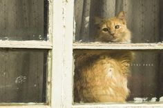 https://flic.kr/p/nddgfh | Cat in Neighbor's Window | It's so much fun when I spy cats in the windows around the neighborhood. Love to seeing these beautiful creatures sunning themselves on their window-sills.