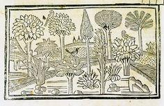 """""""Les arbres et les plantes"""", Tholosa : impr. por H. Meyer, 1494   http://numerique.bibliotheque.toulouse.fr/cgi-bin/superlibrary?a=d&d=/ark:/74899/B315556101_INCTOULOUSE0108_023R#.VA_lg_l_uCn"""