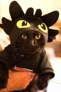These kittens will bring you joy. Cats are amazing companions. Pet Halloween Costumes, Cat Costumes, Halloween Cat, Love Your Pet, Pretty Cats, Cat Memes, Crazy Cats, Cool Cats, Cats And Kittens