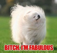 bitch im fabulous