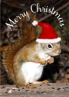 Image result for happy holiday squirrels