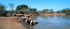 Mkhaya - see a crash of rhino. Game Reserve, Where To Go, Safari, Tourism, Beautiful Places, Africa, Community, Camping, Stone