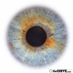 eye-iris-eyeball-retina27