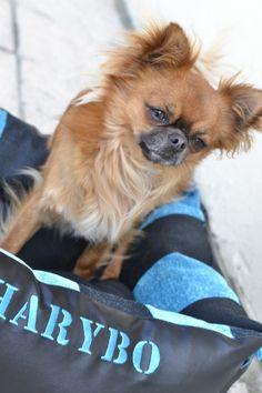 Harybo avec son dodosdouillet de chez dodosdouillets.com