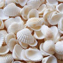 100 pcs/Lot Naturel shell bricolage réservoir aquarium décoration coquille blanche 2-3 cm petite conque mer naturel artisanat blanc mer coquilles conque(China)