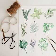 Herbal water color drawing