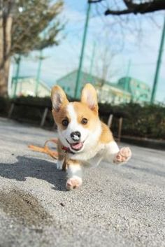 Here comes adorable!