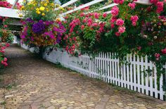 a guide to lasting color in your garden - Fort Bend Lifestyles and Homes
