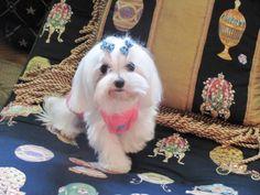 Chanel, belongs to Lynne in Michigan.. doesn't she make a cute model?!