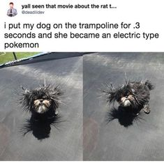 """27 Amusing Memes That'll Make You Forget Your Sunday Sorrows - Funny memes that """"GET IT"""" and want you to too. Get the latest funniest memes and keep up what is going on in the meme-o-sphere. Crazy Funny Memes, Stupid Memes, Funny Relatable Memes, Haha Funny, Funny Cute, Hilarious, Lol, Funny Stuff, Dog Stuff"""