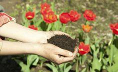 Arquitetura Sustentavel: Cinco passos para iniciar a compostagem doméstica