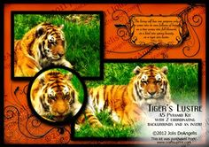 "Tiger s Lustre A5 Pyramid Card on Craftsuprint designed by Jolis DeAngelis - ""That's Mr. Tiger to you, Bub!"""