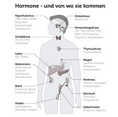 What is stress? How does it work in the body? What are symptom Was ist Stress? ✔ Wie wirkt er im Körper? ✔ Was sind Symptome & Auswirkunge… What is stress? ✔ How does it work in the body? ✔ What are symptoms & effects … – the - Health And Nutrition, Health And Wellness, Health Fitness, What Is Stress, Stress Causes, Stress Symptoms, Learn German, Does It Work, Good To Know