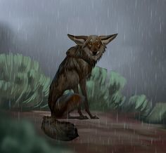 Wet yote by Artist ailah/Therese Larsson Sweden