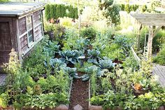 what is a potager garden? - Google Search