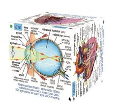 Zoobookoo Kniha v kocke Ľudské telo Vitreous Humour, Messages, Tela, Text Posts, Text Conversations