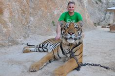 Sauvons c'est magnifiques animaux qui sont maltraité tous ça pour le plaisir de touristes stupides