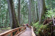 A unique rainforest comprised of some of the largest cedar trees in British Columbia is set to become a provincial park.