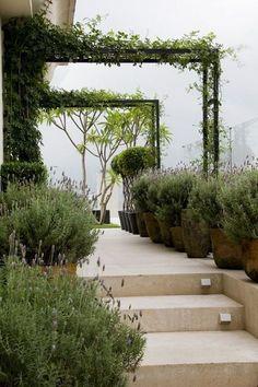 Lavender Garden (6)