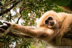Varsha Raghavan took this gorgeously framed shot at monkey land. Mammals, Monkey, Shots, Wildlife, Africa, Frame, Nature, Photography, Instagram