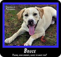 Meet BRUCE -- he's a very handsome boy, full of fun and energy.  He's young -- only 9 months old -- so he's got energy to spare.  If you're a high-energy family, looking for a loving companion, BRUCE is the guy for you!