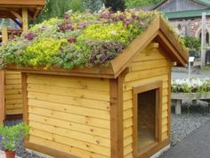 Green roof shed Dog Garden, Lawn And Garden, Cubby Houses, Dog Houses, Living Roofs, Living Walls, Back Gardens, Roof Gardens, Outdoor Storage