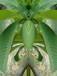 créature étrange fleur flower nature plante verte botanique composition portrait fantastique surnaturel personnage imaginaire apparition mystérieux monstre caricature